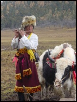 Tibetan herder